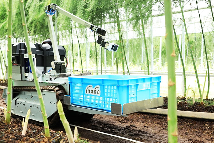 Inaho's autonomous asparagus picking robot, Japan