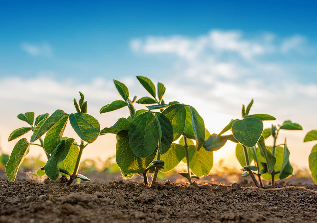Enko Chem Inc aims to kick-start the crop protection industry's stalled R&D pipelines to develop novel, safer products for the global farming community