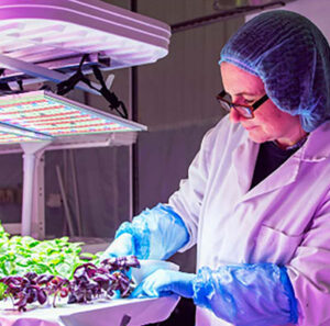 Growpura is set to create a hydroponic farm, training and demonstration facility in Bedford, UK