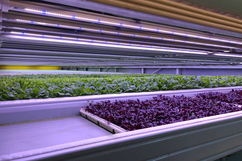 """""""We are excited to continue our global roll-out and bring better tasting, highly nutritious asian greens, salads and herbs to the people of Singapore,"""" added Dr. Henner Schwarz, CEO of &ever, which launched its first indoor farm in Kuwait earlier this year."""