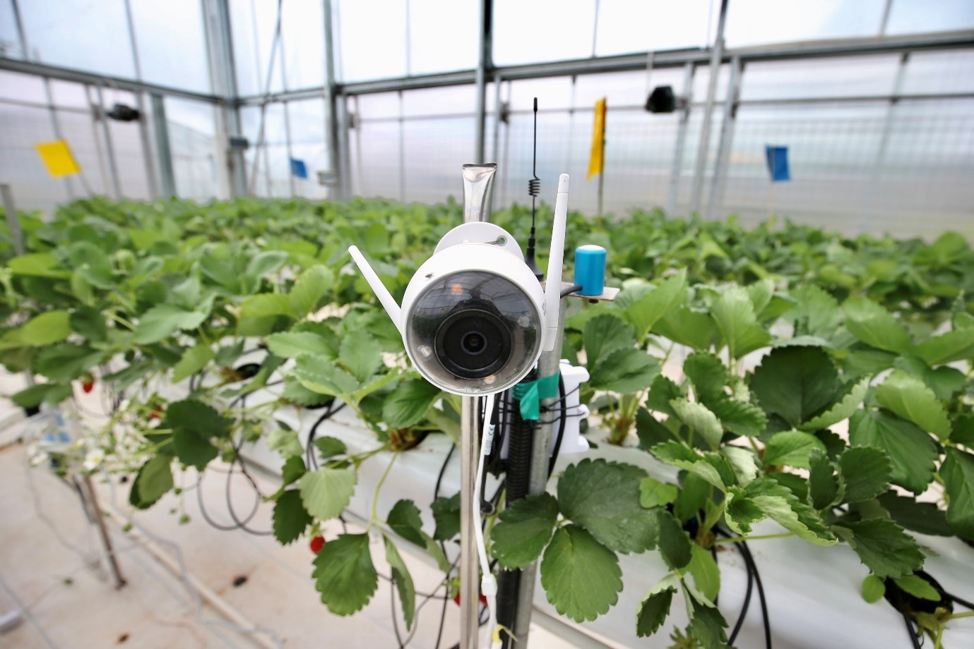 Sensors deployed in the greenhouse to monitor plant growth at the Smart Agriculture Competition (Source: Pinduoduo)