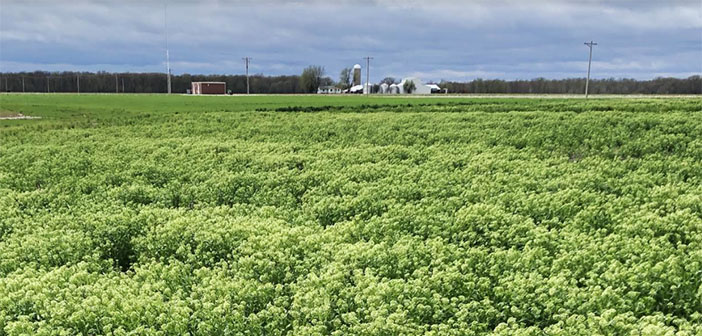 $8 million for non-GMO cover crop which supports regenerative agriculture