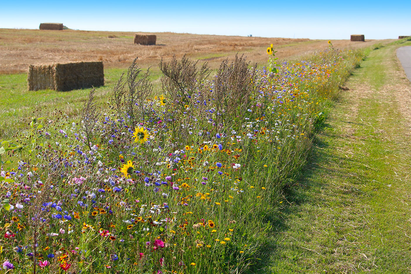 wildflower borders along farm fields to support pollinators and other wildlife
