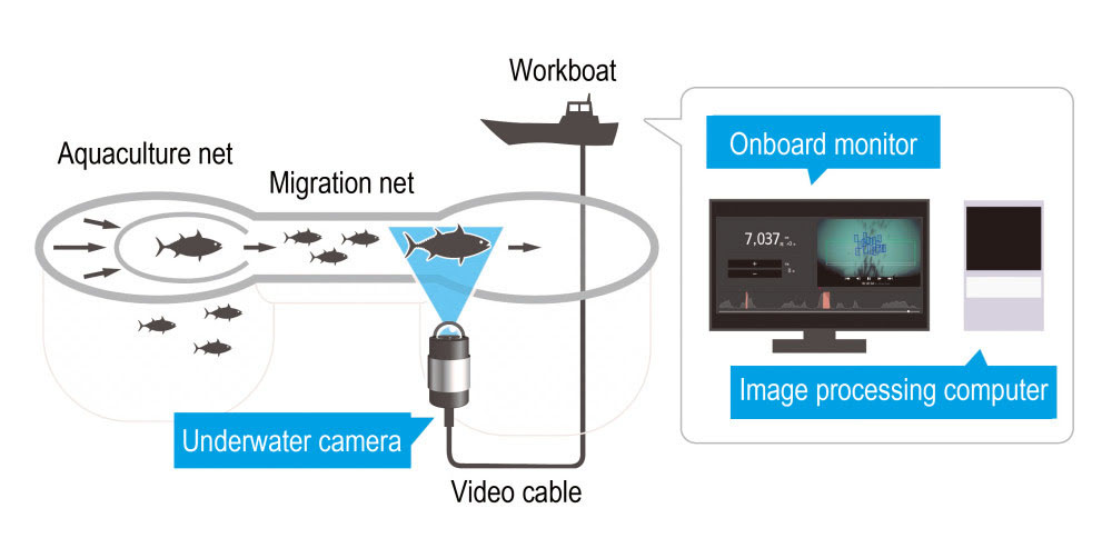 Diagram of the automated fish counting system