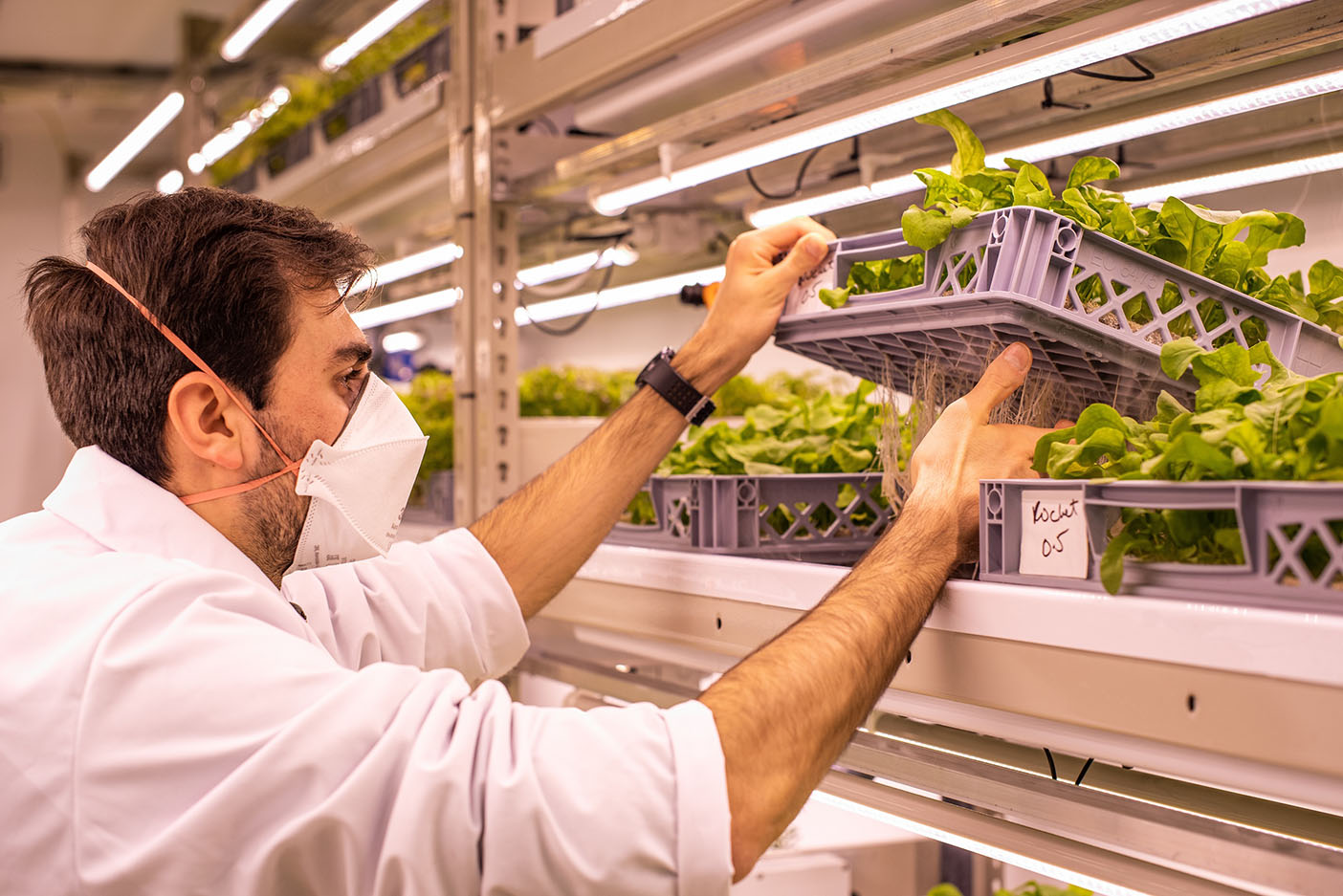 Ricardo Lopes, Research Scientist at LettUs Grow and research lead on the project, checking on plants in the aeroponic vertical farm