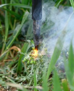 Weed zapping