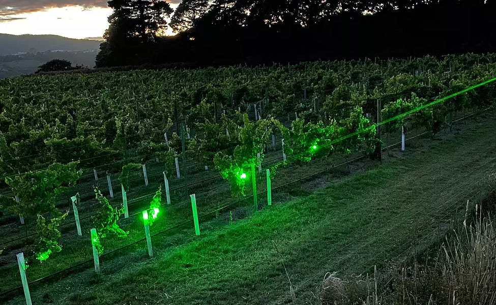 The interest in trialling the laser technology in almond orchards arose after grape growers successfully used lasers to move birds on from their vineyards.