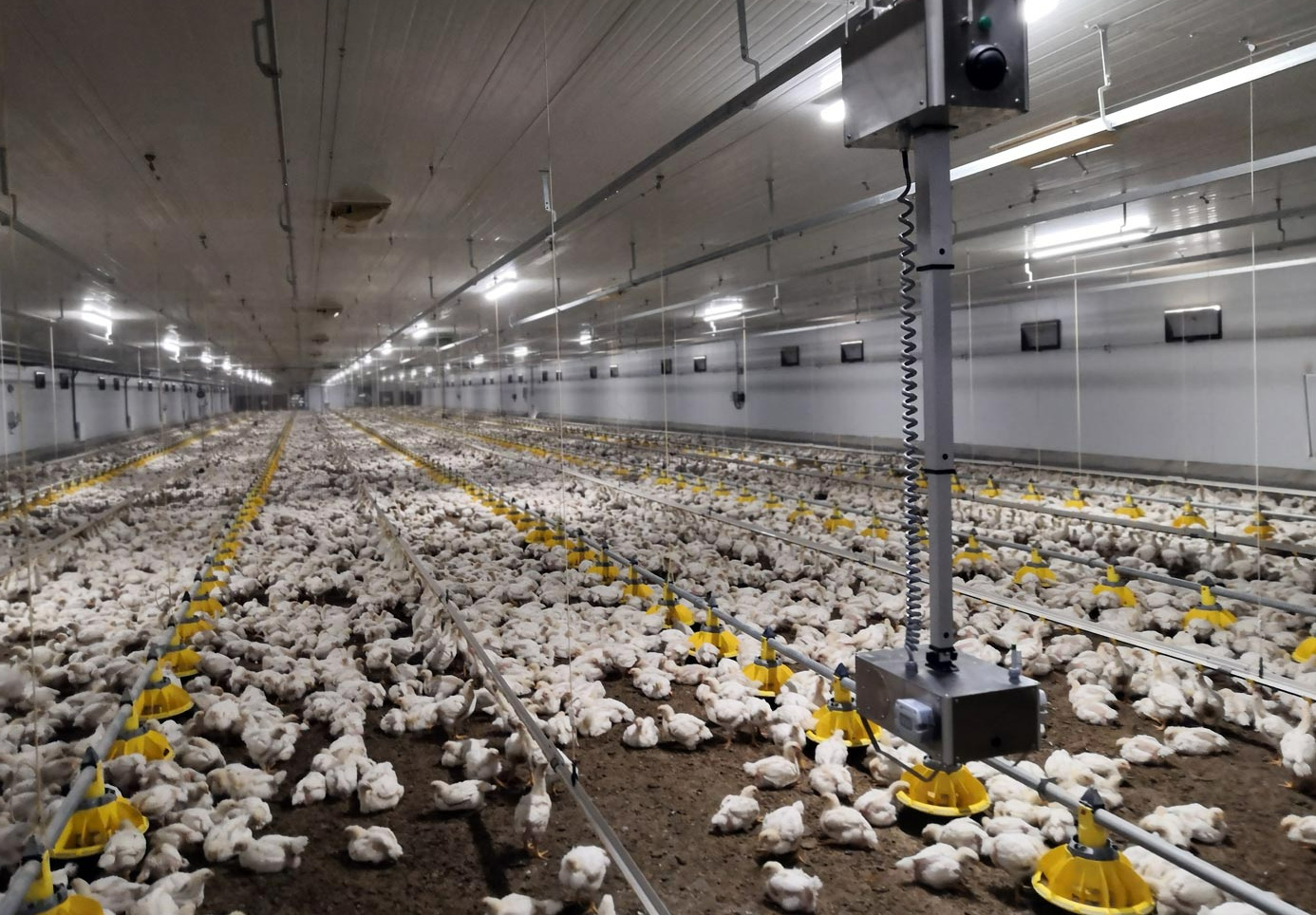 The rail-mounted robot uses a complete set of sensors to measure thermal sensation, air quality, light and sound in poultry housing.